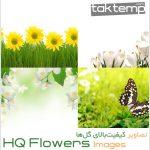 مجموعه تصاویر کیفیتبالای گلها – HQ Flowers Images