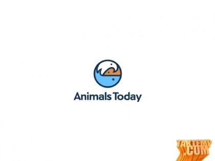 Animals-today