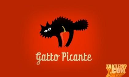 Gatto-Picante