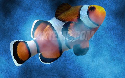 undersea-(11)
