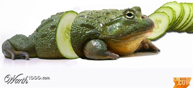 7-photo-manipulation-frog